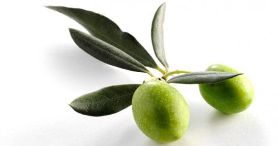 Zeytin yaprağı faydası
